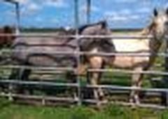 rancho en venta en r a campo alto balancan, tabasco